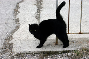 black-cat1.jpg